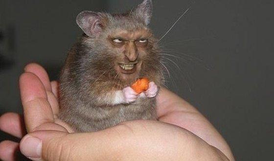 Хитрый-крыс